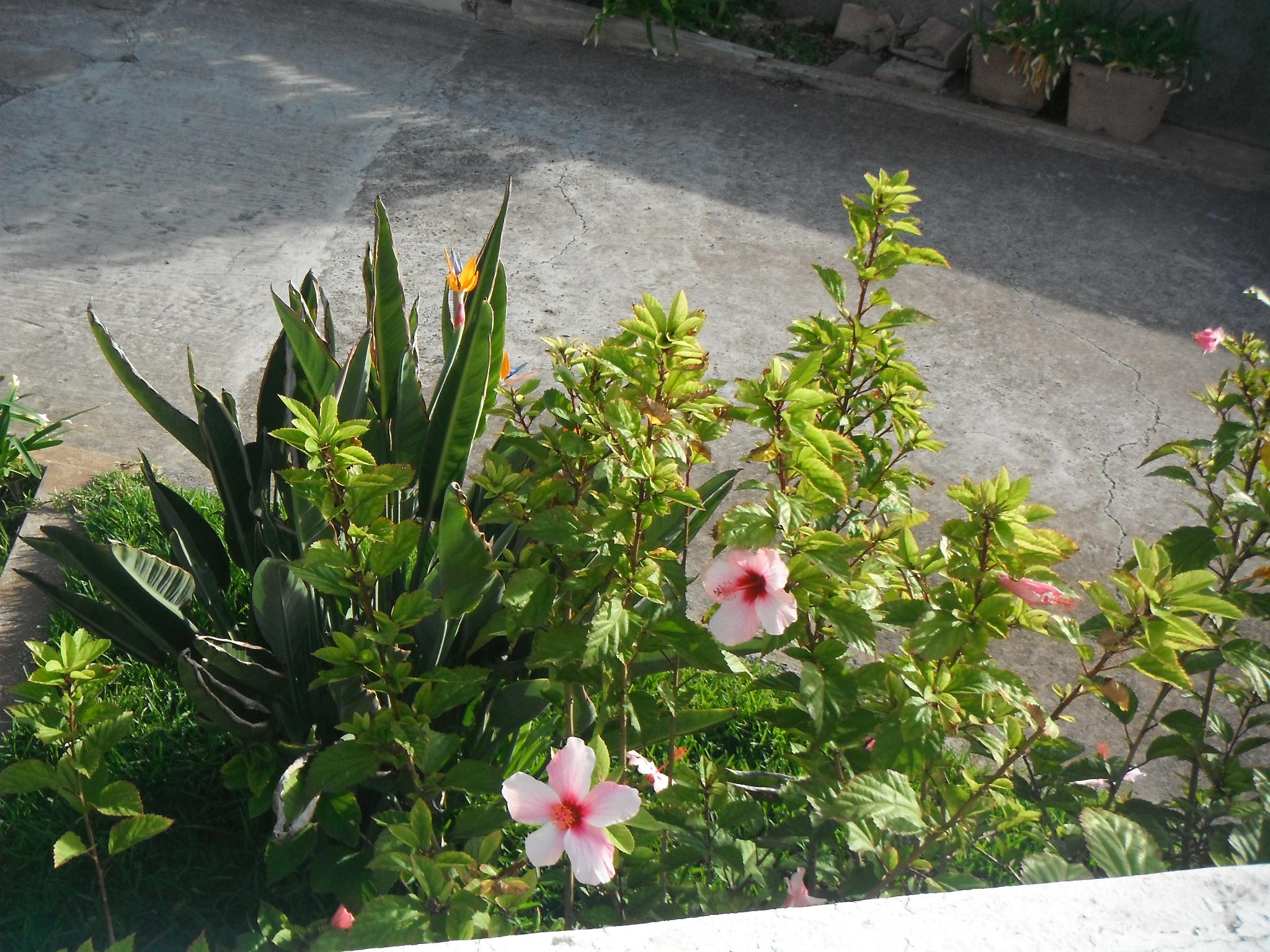 Fleurs8