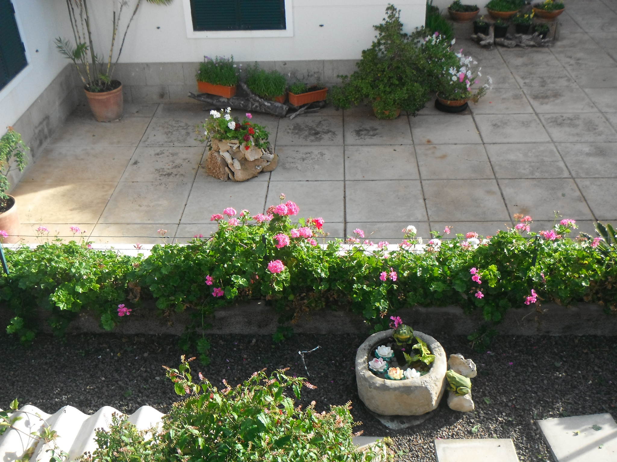 Fleurs9