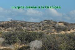 Graciosa6