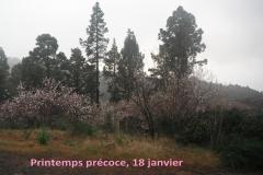 La-Palma14