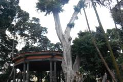 Tenerife11
