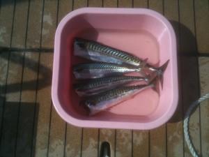 10-4 première pêche