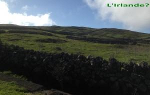 2014-01-08 15h09 paysage irlandais muretins vaches vers Jinama El Hierro Canaries