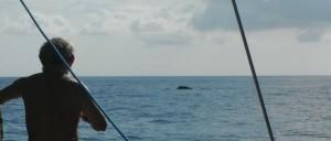 2014-09-08 9h18 2 baleines entre Ibiza et Majorque Espagne