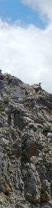 2016-05-17 12h52 chèvre montagne Crète